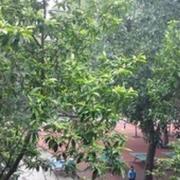 四川省成都市大面中学校