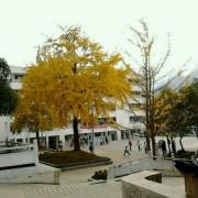 大关县第一中学