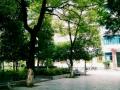 秀山民族中学2018年普高招生录取分数线