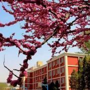 北京新桥外国语学校