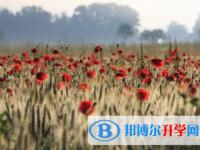 2021年秦皇岛中考网络服务应用平台
