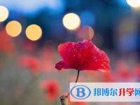 乐山2022年中考服务平台
